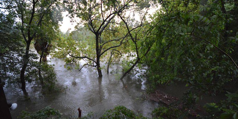 Hurricane Harvey - Trees in Flood Waters