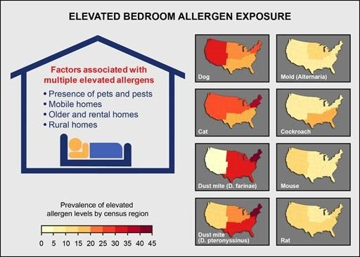 elevated bedroom allergens exposure