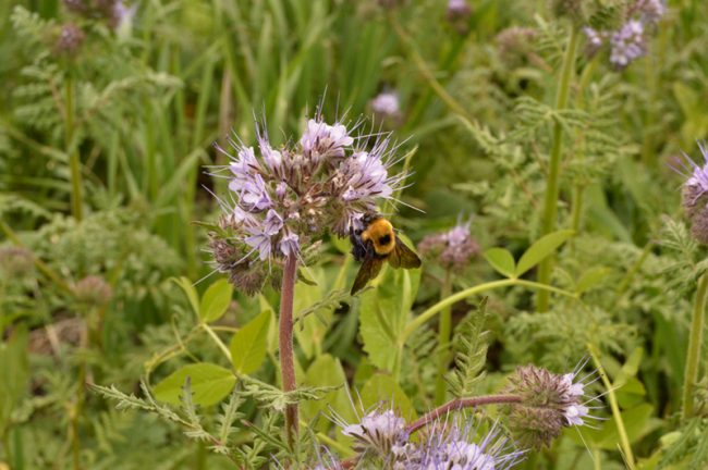 regenerative agriculture - bee on flowers