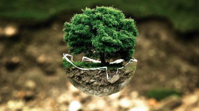 Earth Day - Tree