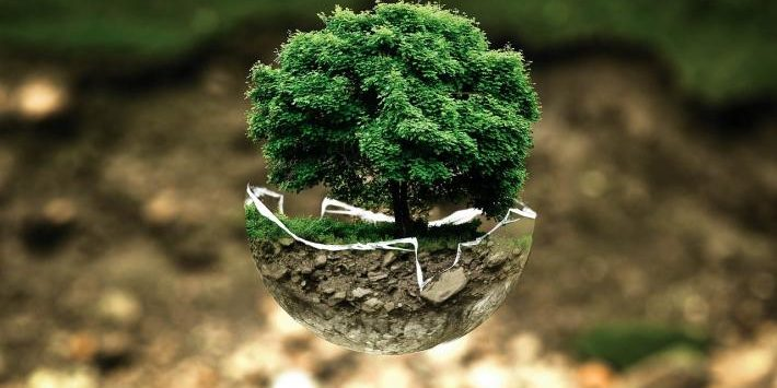 Earth Day - Tree