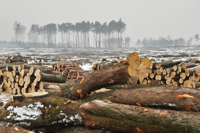 Living Planet Report - Forest Trees Cut Down