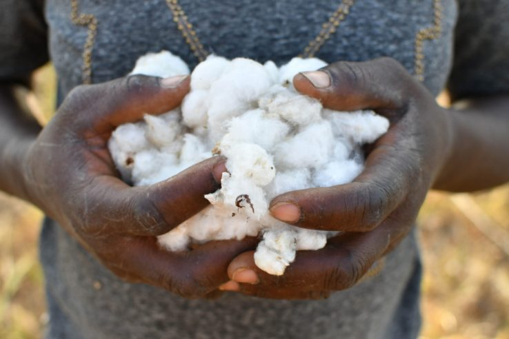 UN Alliance for Sustainable Fashion - Hands Holding Cotton