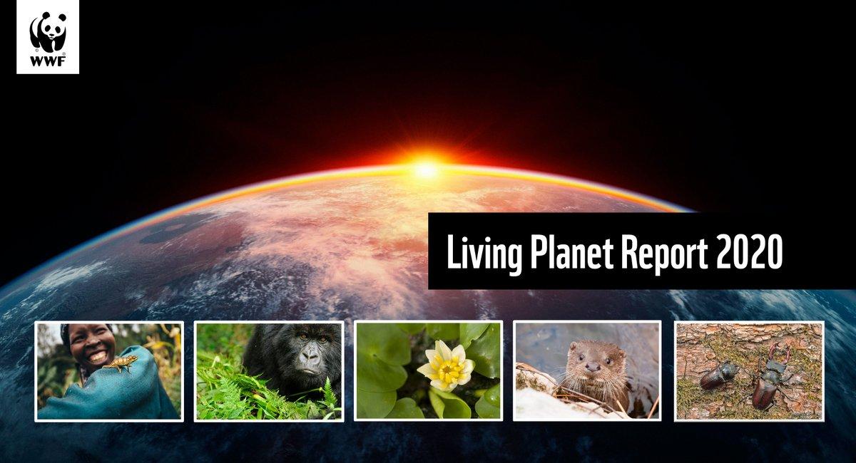 wildlife decline